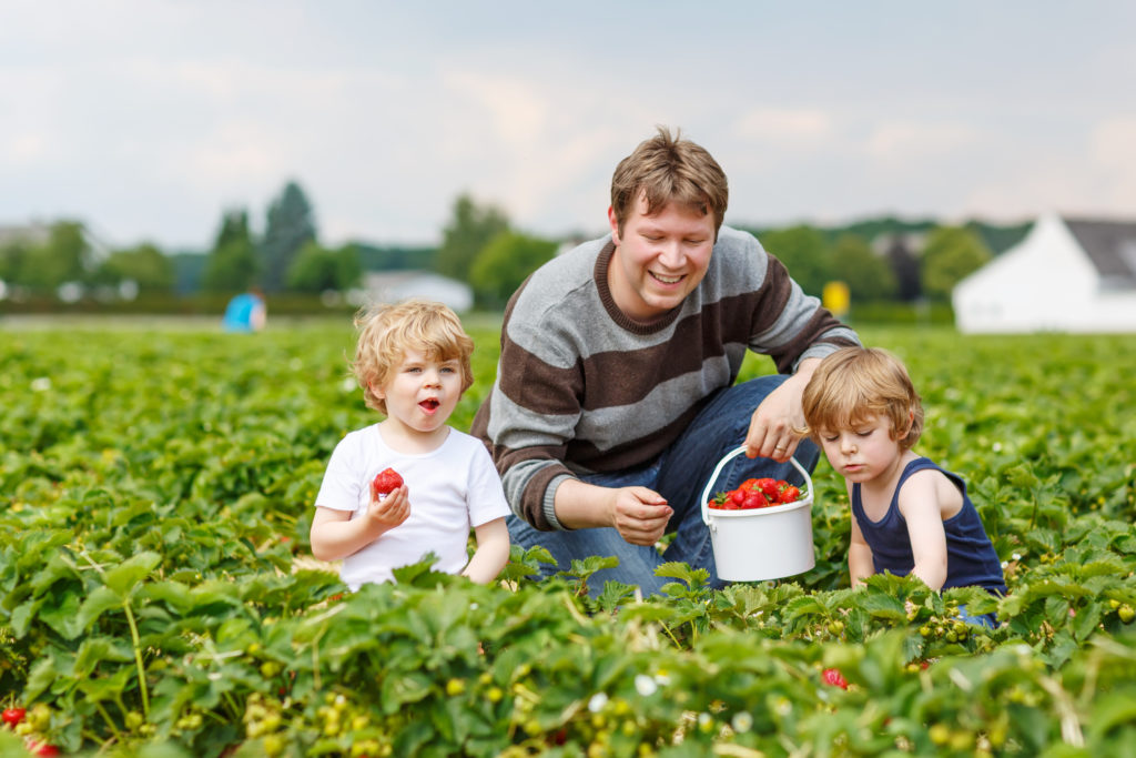 Incorporate Healthy Eating and Physical Activities Into Your Family's Daily Routine